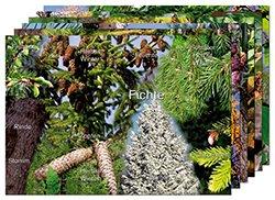 """Puzzle-Set """"Bäume in den Jahreszeiten"""", Lebensraum Wald"""
