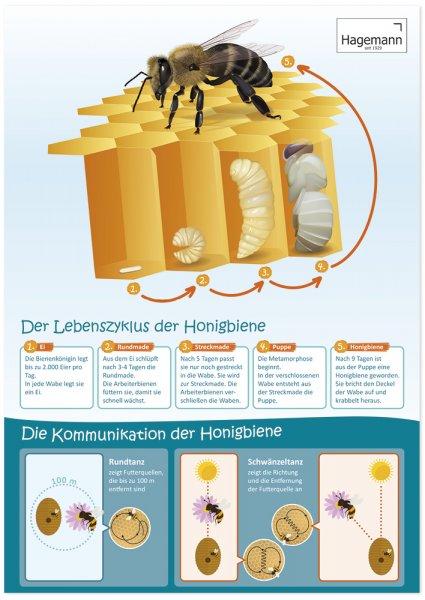 Poster Lebenszyklus und Kommunikation der Honigbiene A2
