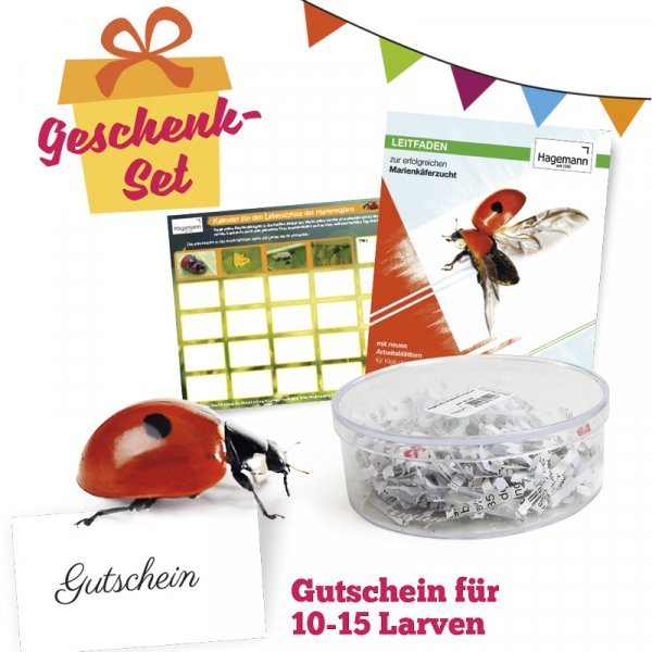 Marienkäfer-Geschenkset, kompakt, 5-tlg.